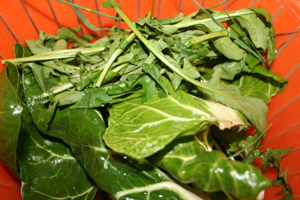 salade de printemps sauvage (6).jpg