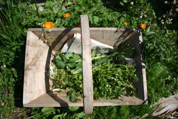 stellaire et salades sauvages (6).jpg