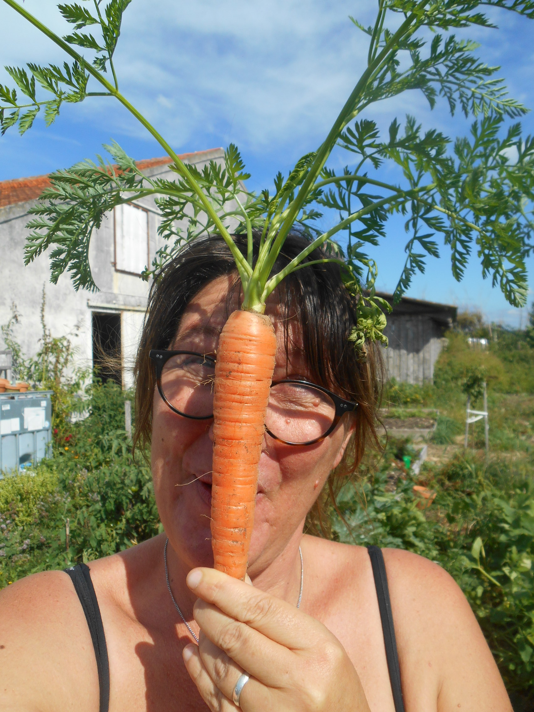 11 aout 2017 carotte bio (1).JPG