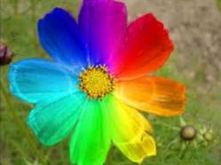 Couleur des fleurs.PNG
