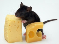Souris fromage.PNG