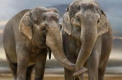 éléphants.PNG