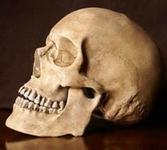 Taille de crâne.PNG