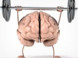Cerveau bailler.PNG