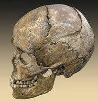 Crâne humain.PNG