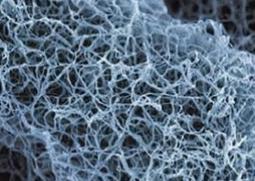 nanofibres.PNG