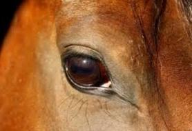 Vue du cheval.PNG