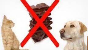chien et chocolat.PNG
