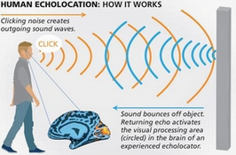 Echolocation.PNG