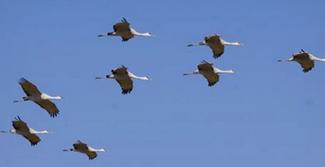 Oiseau migrateur.PNG