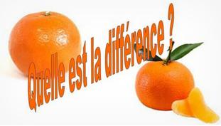 Clémentine vs mandarine.PNG