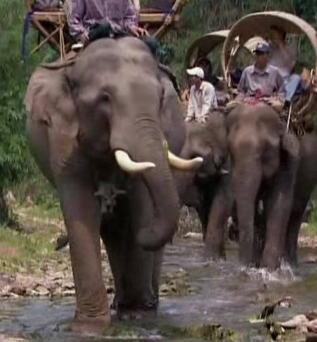 Visite sur dos éléphant.jpg
