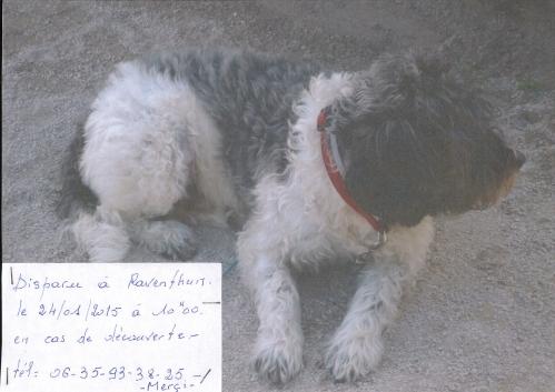 chien perdu_001.jpg