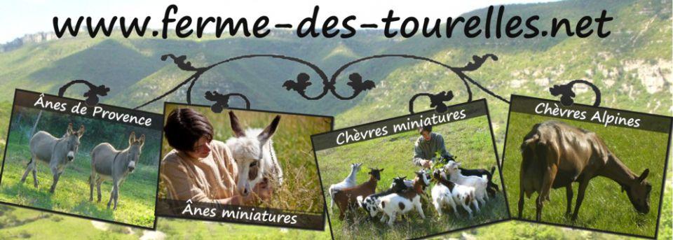 www.ferme-des-tourelles.net - ÂNES MINIATURES