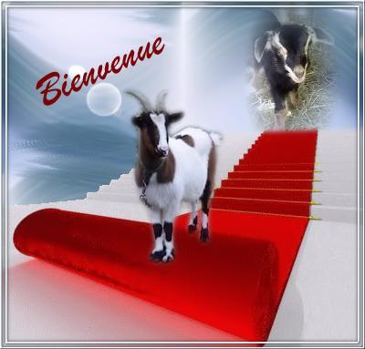 https://www.blog4ever-fichiers.com/2014/10/785772/bienv-domi-biquettes.png