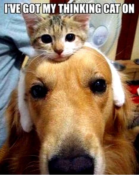 MyThinling Cat.jpg