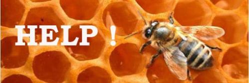 abeille-miel-helpe.jpg