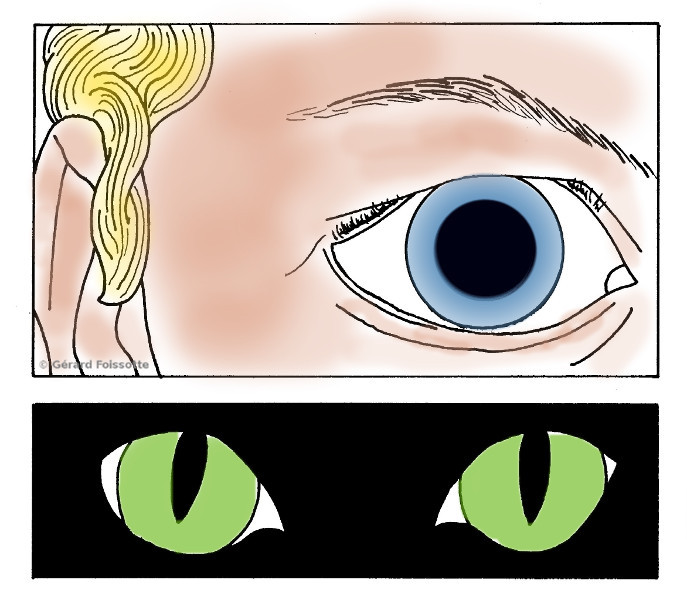 YEUX CHAT REDUIT.JPG