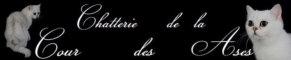 courdesases.blog4ever.com
