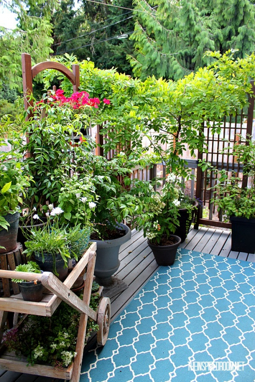 plants-on-back-deck.jpg