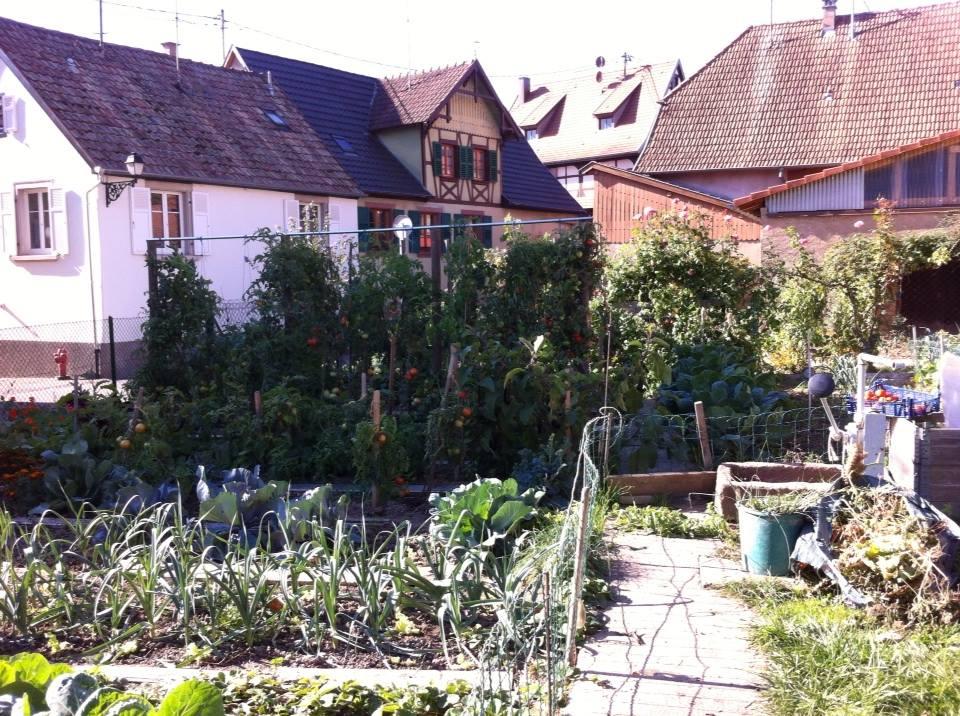 kodian jardin.jpg