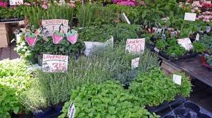 marché plantes.jpg