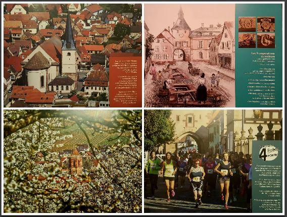 collage roselivre.JPG