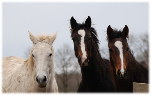 chevaux.png