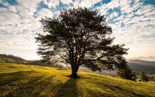 photo arbre ensoleillé