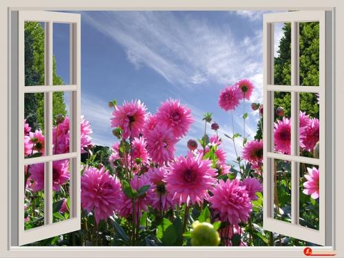 fenêtre ouverte sur champs de fleurs