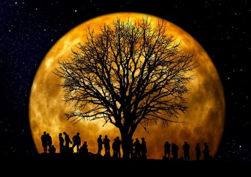 arbre et gens devant lune