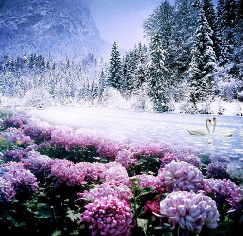 Fleurs en hiver.PNG