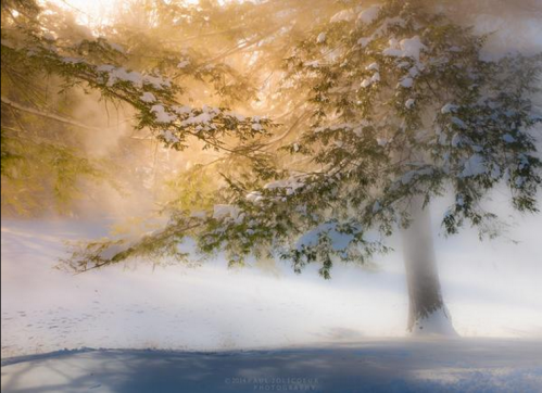 La brume en hiver.PNG