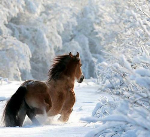 Cheval dans la neige.PNG