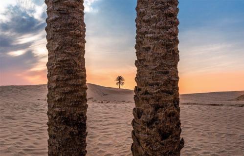 Entre 2 palmiers - Copy.PNG