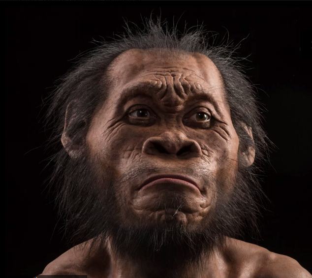 Homo Naledi.PNG