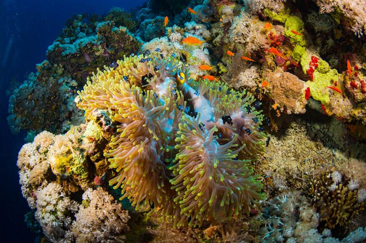 OCEANS08.PNG