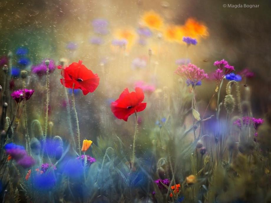 Monet's Garden by Magda Bognar.PNG