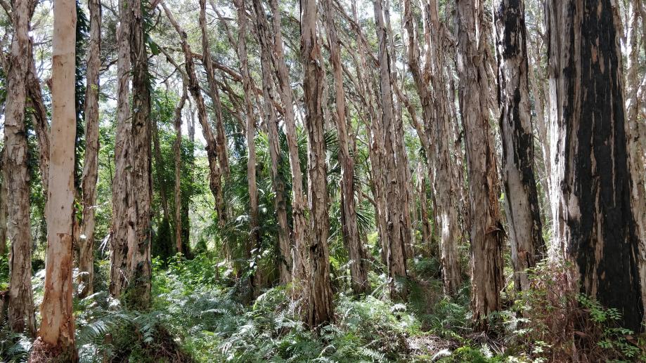 La Paperback Forest, très dense