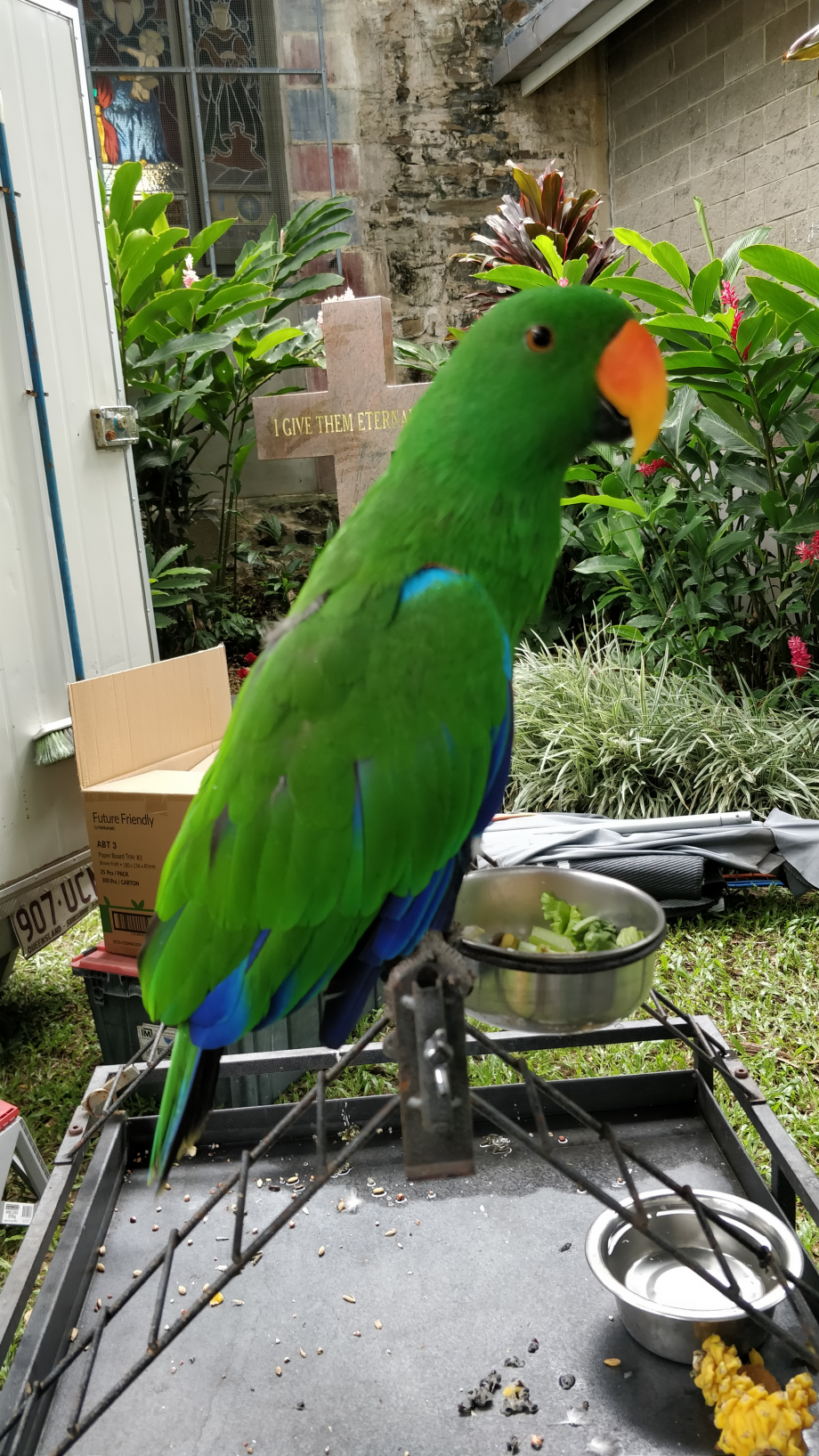 Très beau perroquet qui surveille l'étalage de son maître sur le marché
