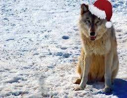 Loups,on en est fans !!