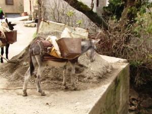 L'âne en Kabylie sollicité pour les travaux