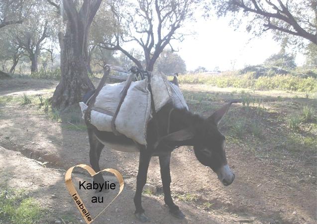 âne en kabylie transportant les olives