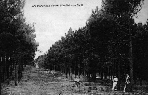 la forêt 1.jpg