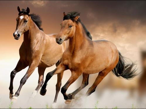 chevaux au galop.png