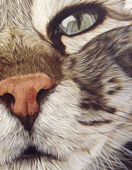 truffe de chat gros plan.jpg