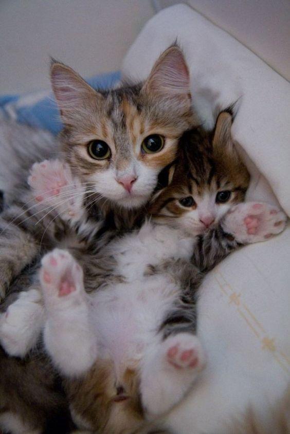 chat et châton.jpg