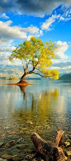 arbre au milieu lac.jpg