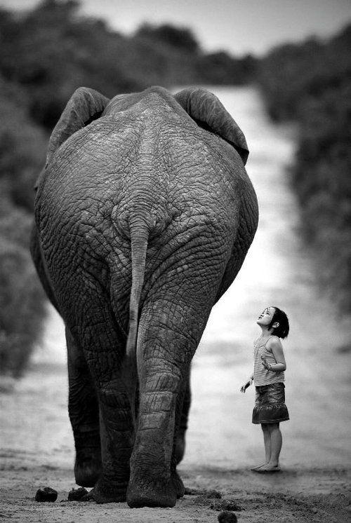 enfant et elephant.jpg