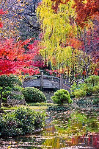 paysage japonais très coloré.jpg